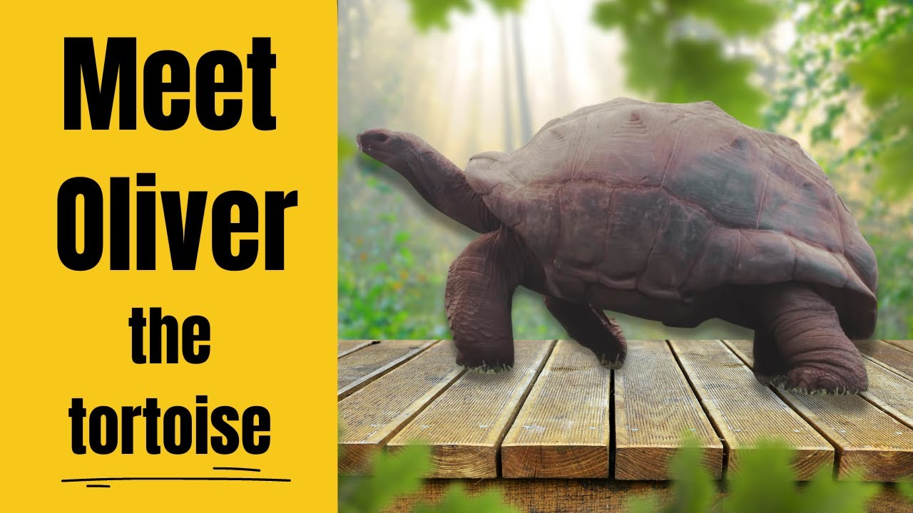Aldabra tortoise images galleries What do you buy an 80 year old man