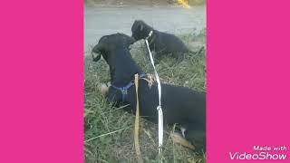 Тьюздей клип про животных