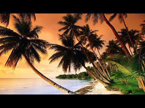 Beautiful Tropical Music & Caribbean Music & Hawaiian Music - Island Paradise 🌴
