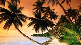 1 Hour of Tropical, Caribbean, and Hawaiian Music - Stafaband