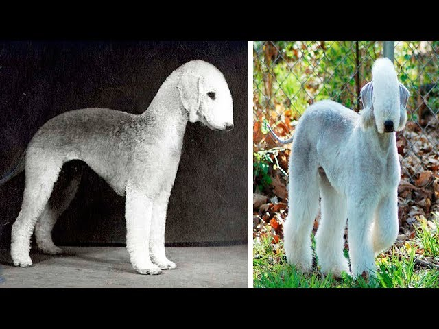 THE RAREST DOG BREEDS In The World