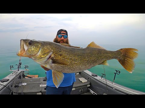 Walleye Fishing Lake Erie (CATCH & COOK)