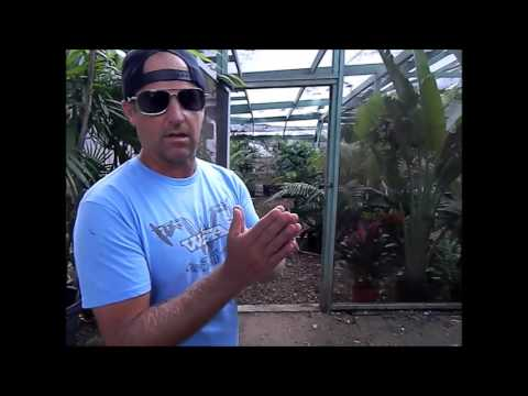 Jungle Music New Palm House with Rusty