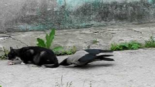 Кошка и ворона