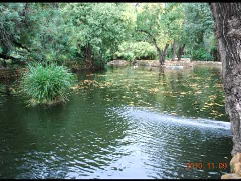 Lakes and ponds in parks