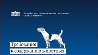 Послевкусие. Госдума приняла закон об ответственном обращении с животными