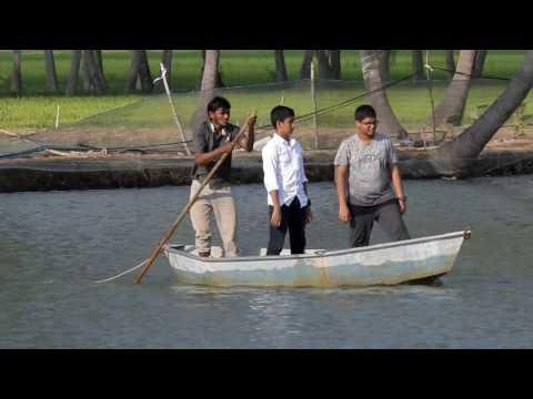 Shrimp Farms - Podur