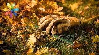 Как подготовить сад к зиме? – Все буде добре. Выпуск 892 от 06.10.16(У мамы Ольги Волковой в прошлом году, из-за того, что зима была холодная, вымерли все молодые деревца. Особым..., 2016-10-06T16:01:22.000Z)