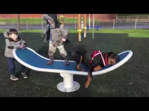 10 Funniest Rottweiler Videos Part 1