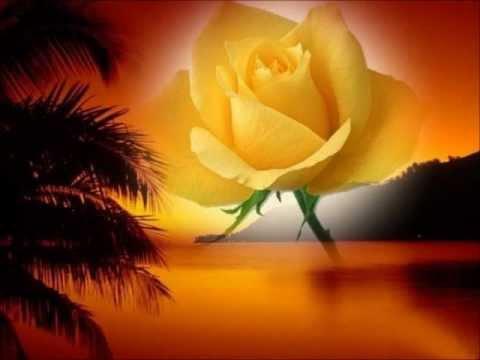 Las rosas son hermosas por mari jose youtube - Rosas rosas hermosas ...
