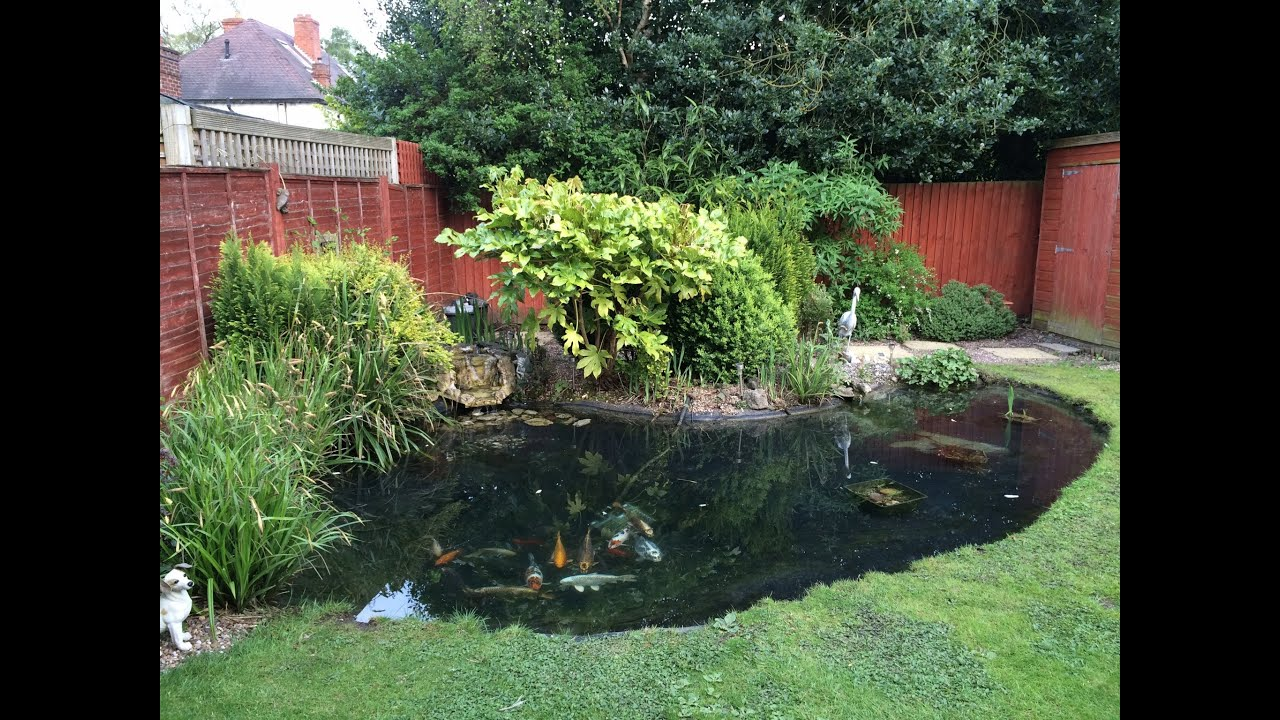 Draining & Cleaning Garden Pond Time Lapse - YouTube