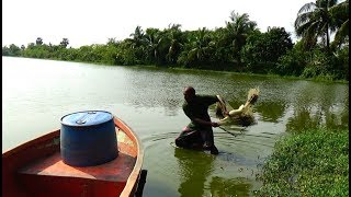 Net Fishing | Catching Fish By Cast Net | Net Fishing in the village (Part-43)