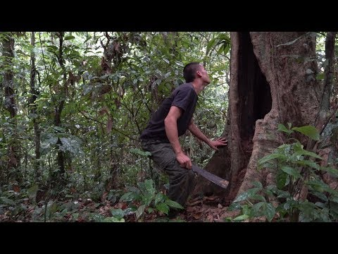 Survival in the tropical rainforest, ep 36, secret food in the tree niche