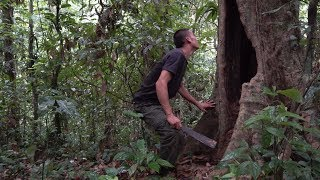Secret food in the tree niche, survival in the tropical rainforest, ep 36