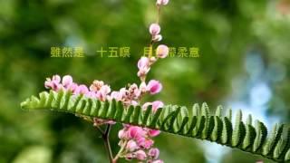 音樂磁場-可憐戀花再會吧, 孫建平 ,Flowers, Taipei