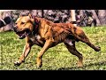 10 Most Energetic Dog Breeds