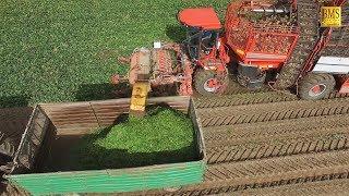 Rübenernte mit Blattbergung - Holmer T3, Claas 920, HAWE, Case, harvest sugar feed beets farmer