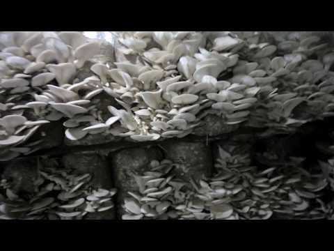 как заказать упаковки грибов вешенки по телефону