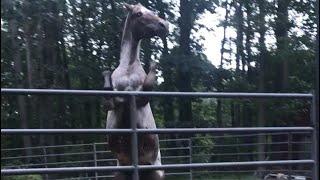 Buddy sour Horse & gaining control