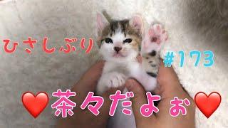 《子猫大好きだぁ》皆さんお久しぶりです✨【子猫冒険譚動画第173話】