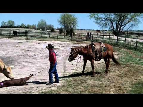 sorrel 6yr old horse for sale