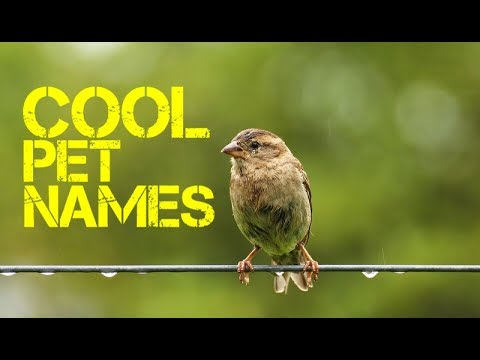 U Names For Birds Female