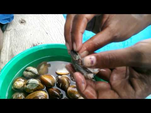 Pearl From Sea Shell