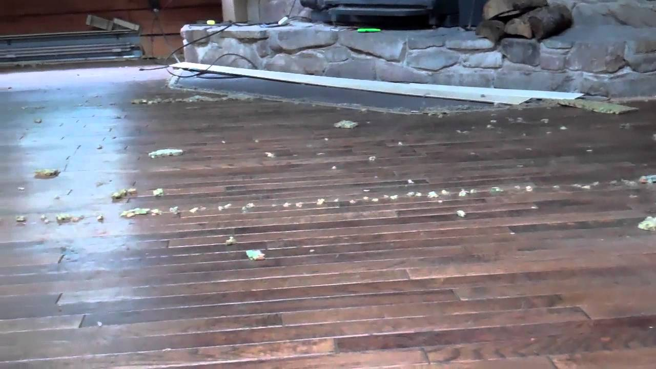Removing Carpet Over Hardwood Floors Youtube