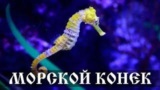 Морской Конек - интересные факты