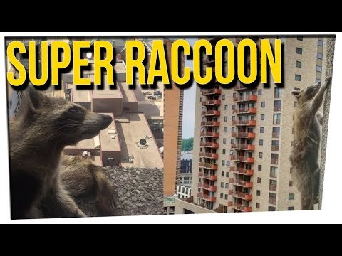 WS - Daring Raccoon Scaled HUGE Office Tower ft. DavidSoComedy