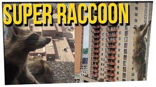 WS - Daring Raccoon Scaled HUGE Office ...
