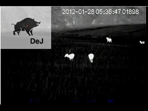 Wärmebildkamera jagd pulsar xq youtube