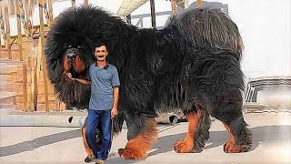 15 Most Expensive Dogs in the World