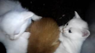 飼い猫ミルクが子猫を産みました。ミルクのLINEスタンプ作りました。 □...