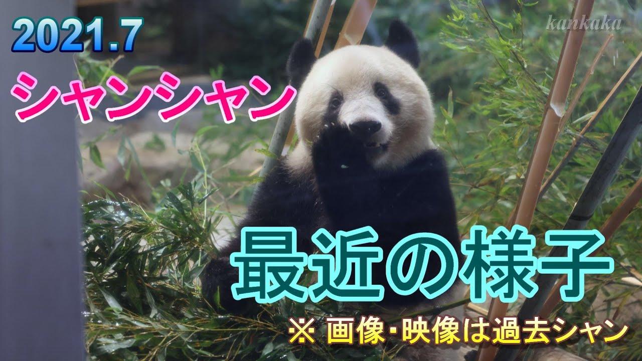 2021.7 シャンシャン 最近の様子 ※画像・映像は過去のものです (Giant panda Xiang Xiang, Shin Shin, Li Li)