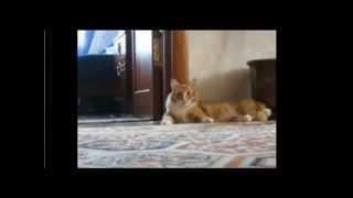 кот сбежал(, 2013-09-10T14:45:25.000Z)