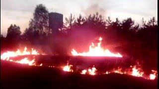 Pożar łąki koło lasu [2016]