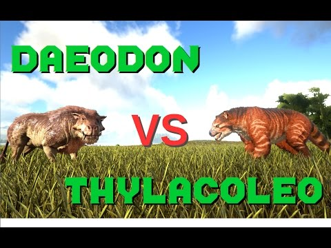 Daeodon Vs Thylacoleo Ark Survival Evolved The daeodon only heals when it has eaten and has food in its food stat. trshow