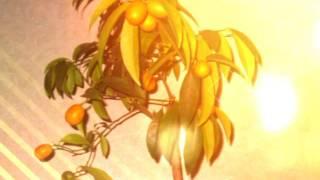 Лимон и другие в домашних условиях