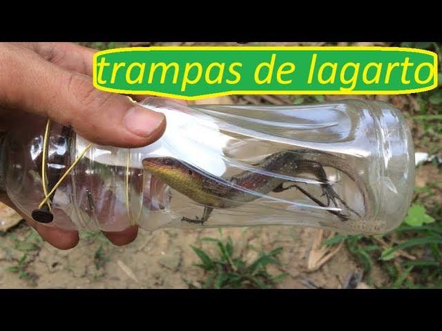Cómo hacer trampas para lagartos - atrapar lagartijas con botellas de plástico