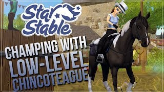 Low-level Chincoteague Pony on the NHC Champ! || Star Stable Online
