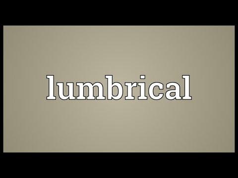 Header of lumbrical