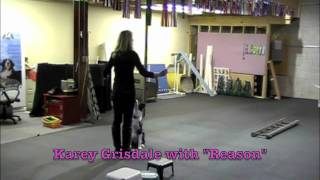 Puppy Foundation Agility Class: Recall Games And Attention Dog Training Games.