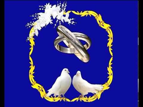 Футаж свадебный  голуби и кольца.