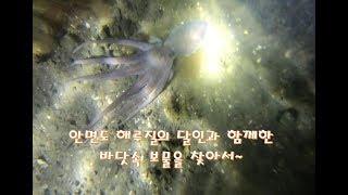 생생바다림/안면도 해루질의 달인과 함께한 바닷속 숨은 …