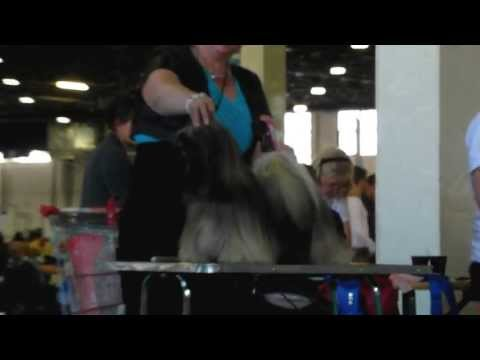 World Dog Show 2013 Lhasa Apso