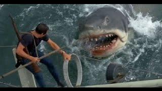 shark attack humans in australia