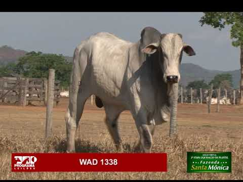 LOTE 26 - WAD 1338