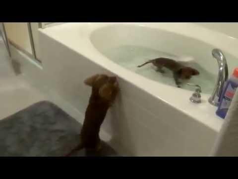 Cute animals! Ferrets and Cats go crazy!