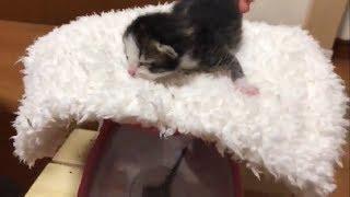 みんな可愛すぎ!生後2日目の子猫たちのモフモフな体重測定